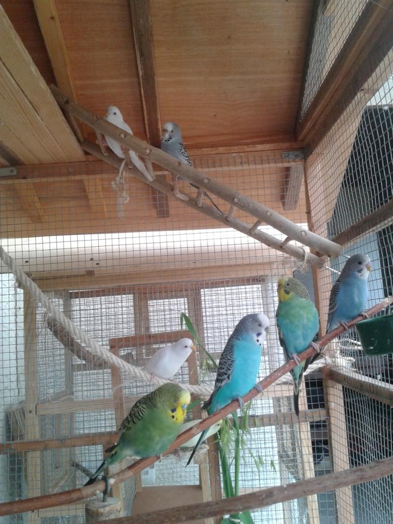 Mes perruche 2012  2012-016
