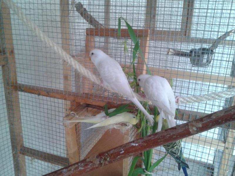 Mes perruche 2012  2012-019