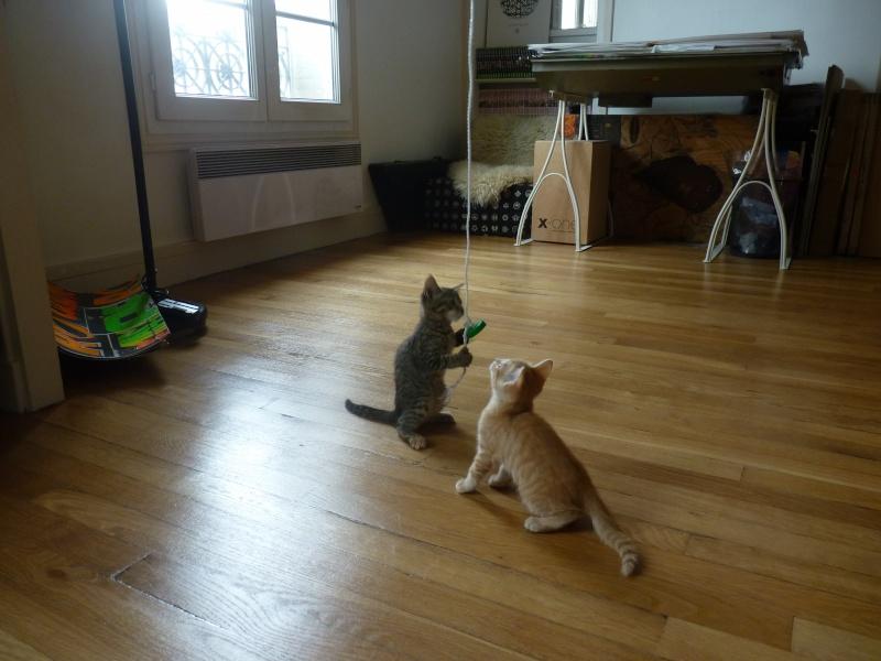 Nouveau foyer pour 2 chatons... P1030812