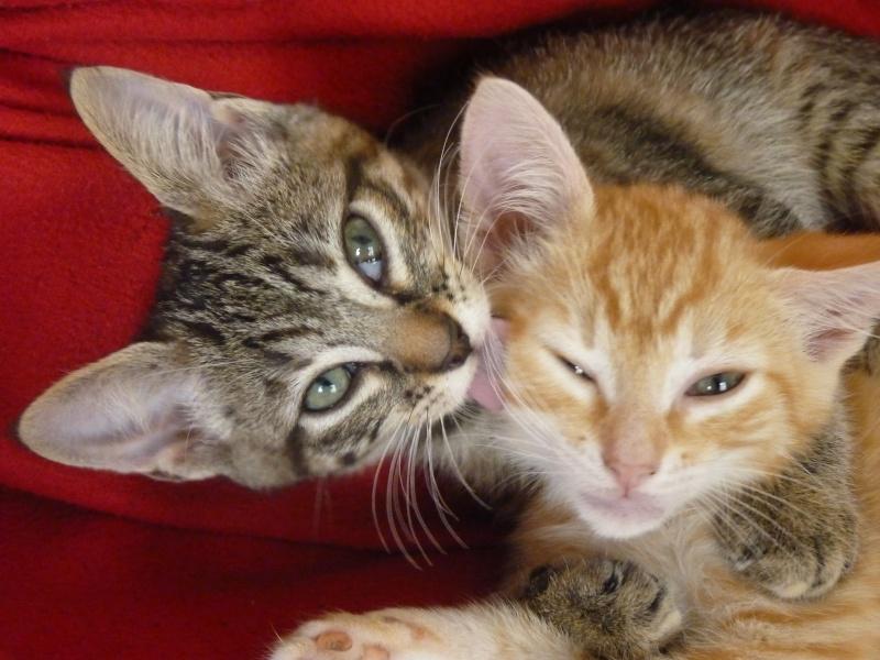 Nouveau foyer pour 2 chatons... P1030814