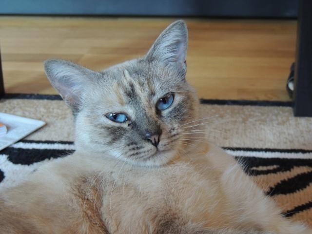 Photos des chats sauvés, avant/après Dscn0111