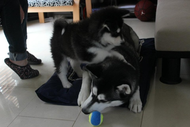 Scrapbook of Titus and Lycan Updated 27th March 2013 26924210