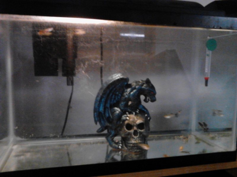 New Breeding Room!!! Img_2012