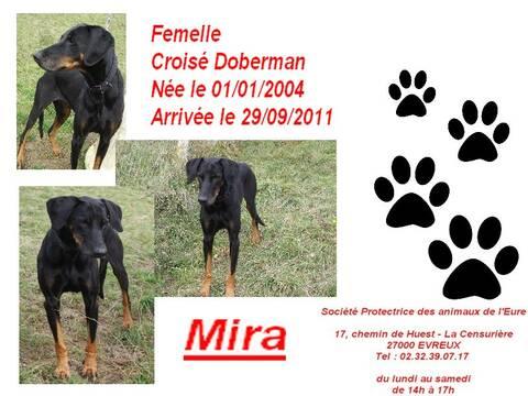 Mira X Doberman 8 Ans Spa D Evreux 27