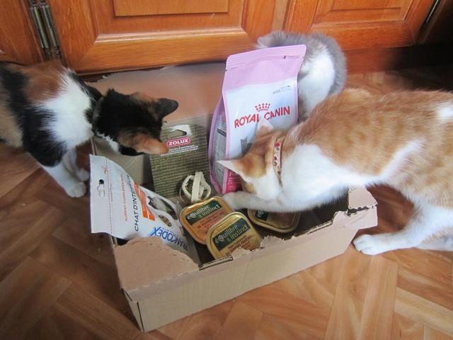 Miaoubox, Kittybox.. Faire plaisir au chat et se faire plaisir! Img_2318