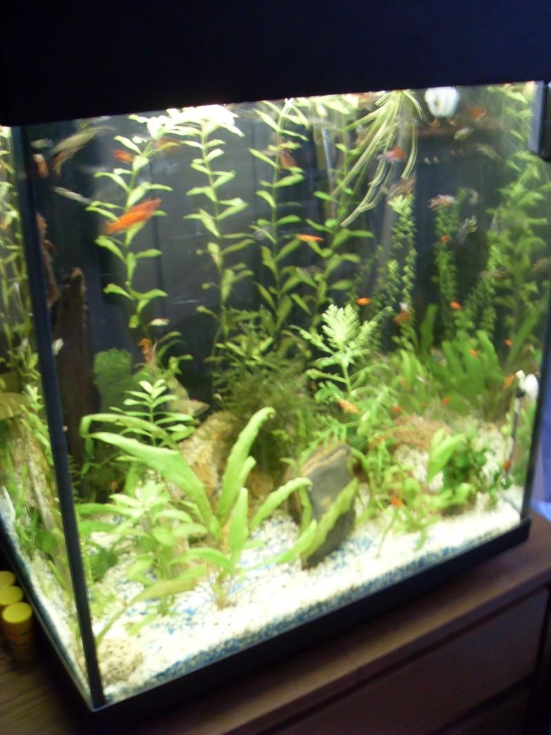 Mon aquarium 00310