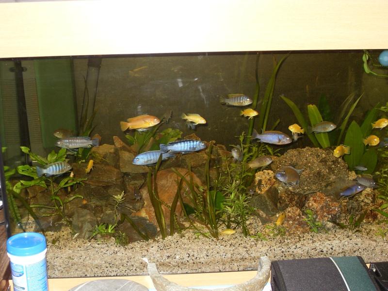 Mon aquarium 00710