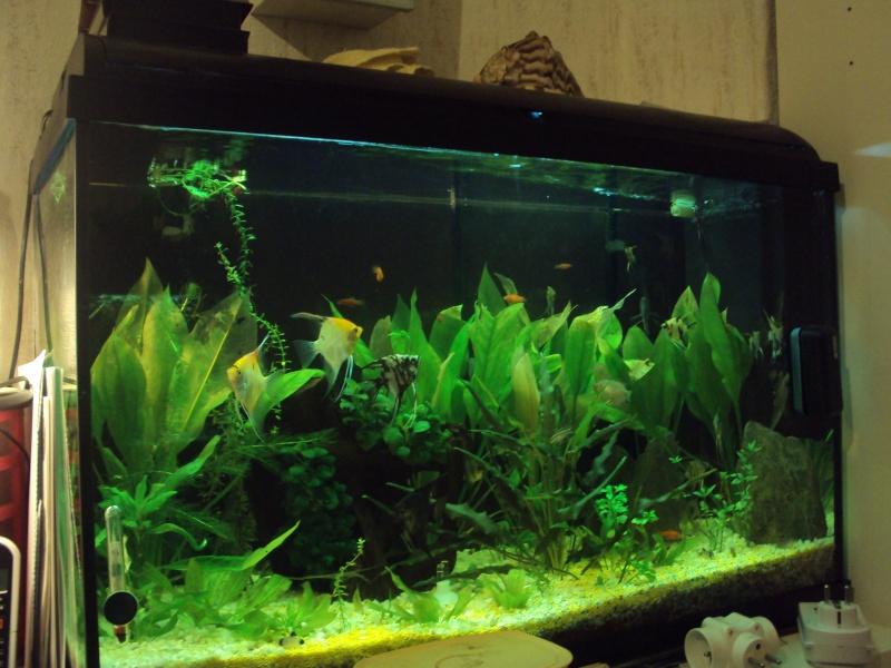 Mon aquarium 00711