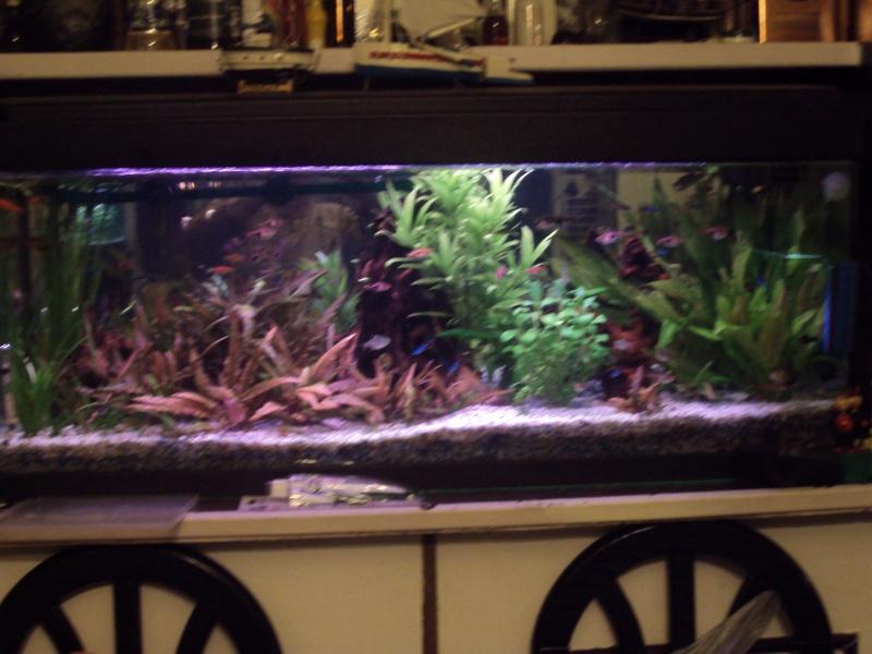 Mon aquarium 01610