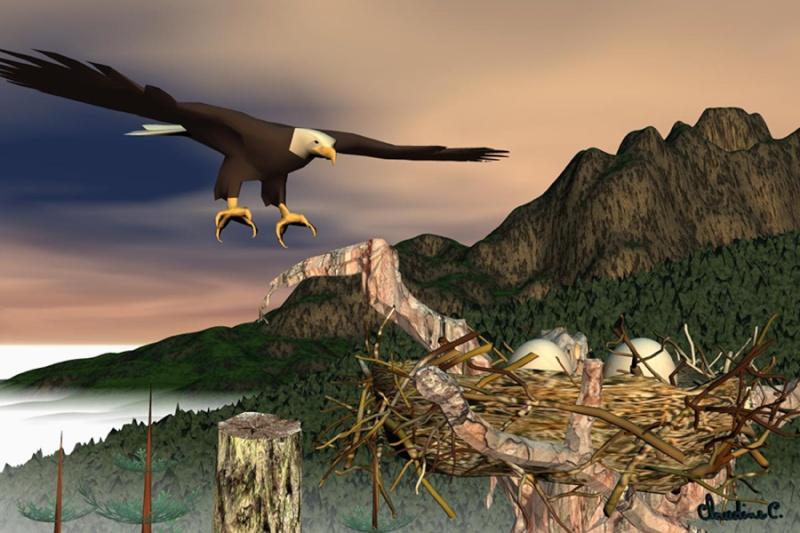 nid de l'aigle