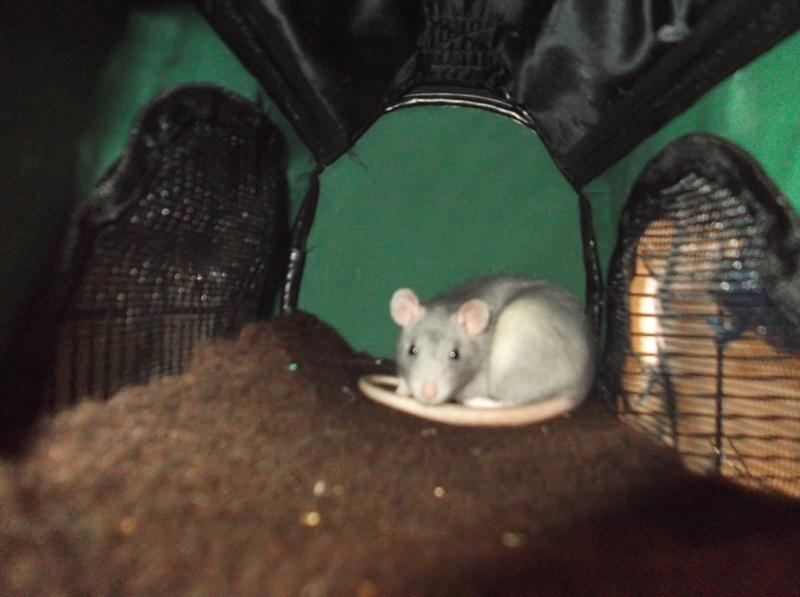 Mes 2 petites ratounettes Dscf1113
