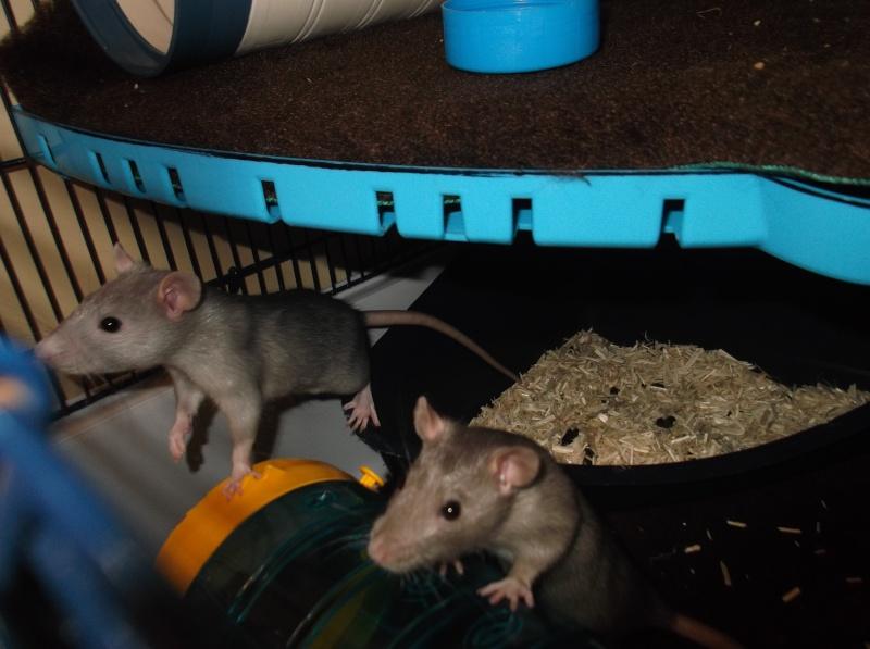 Mes 2 petites ratounettes Dscf1117