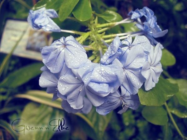♥~ Quelques clichés :) Photo310