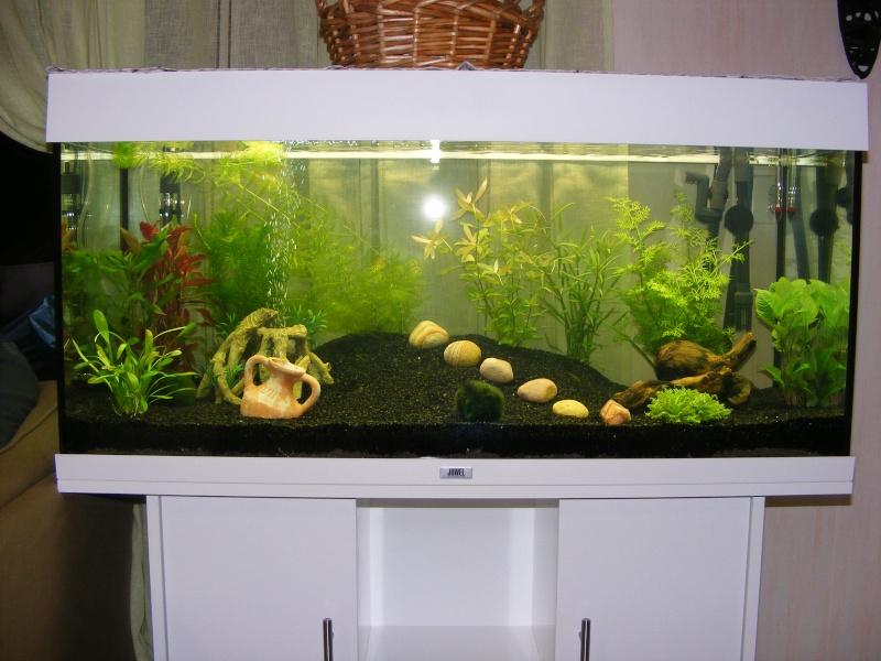 projet aquarium Juwel rio 180 Litres de Natibou Dscf1810