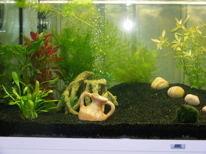 projet aquarium Juwel rio 180 Litres de Natibou Dscf1811