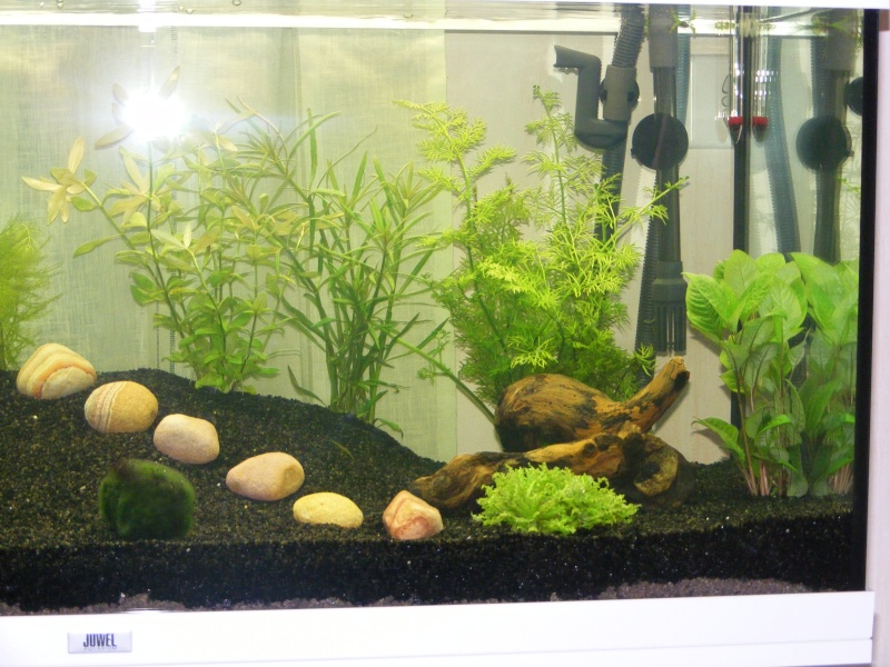 projet aquarium Juwel rio 180 Litres de Natibou Dscf1812
