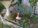 URGENT Recherche une famille aimante pour chiot Beagle Chiot_13