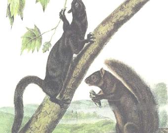 La belette et l'écureuil Il_34010