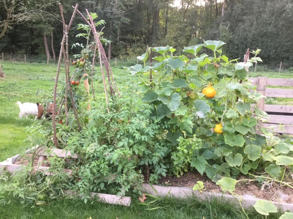 Papa bricole.. et jardine! Img_4111
