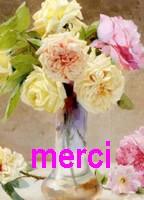 Frees DMC Merci210