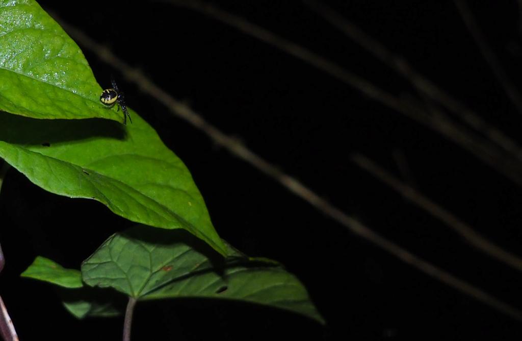 Ma passion de l'entomologie. Araign10