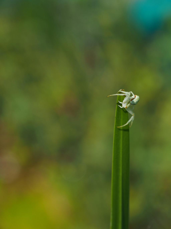 Ma passion de l'entomologie. P5160110