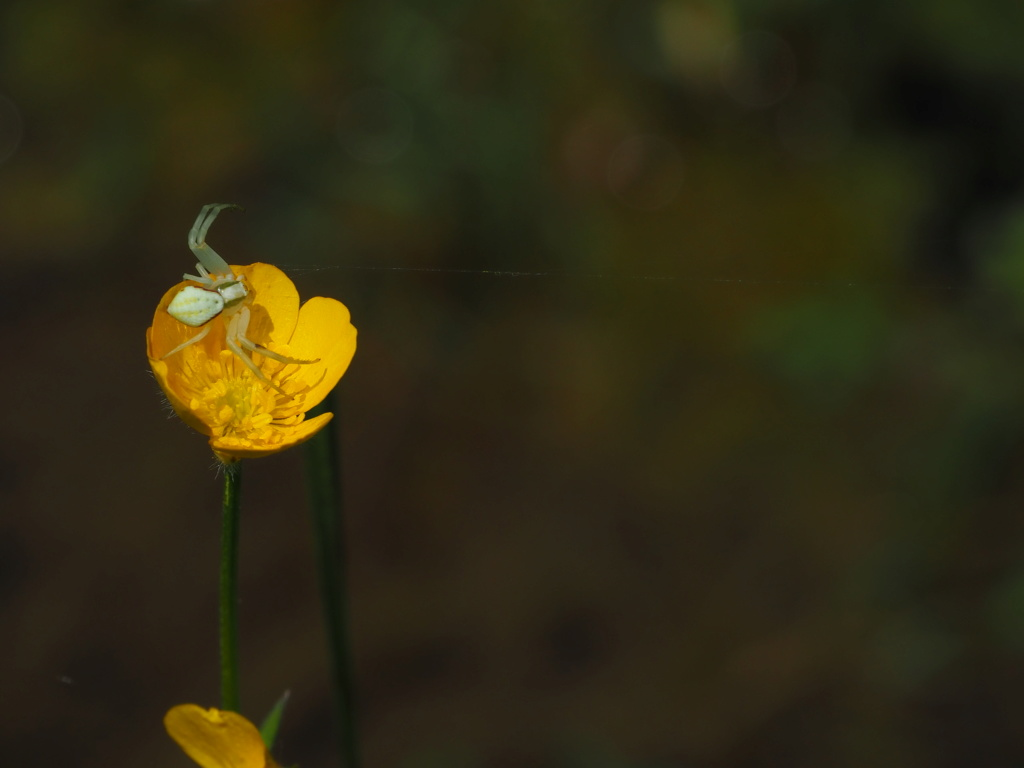 Ma passion de l'entomologie. P5160111