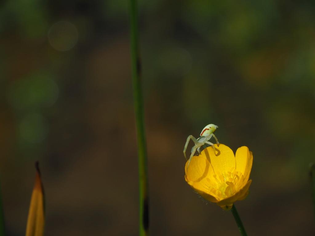 Ma passion de l'entomologie. P5160112