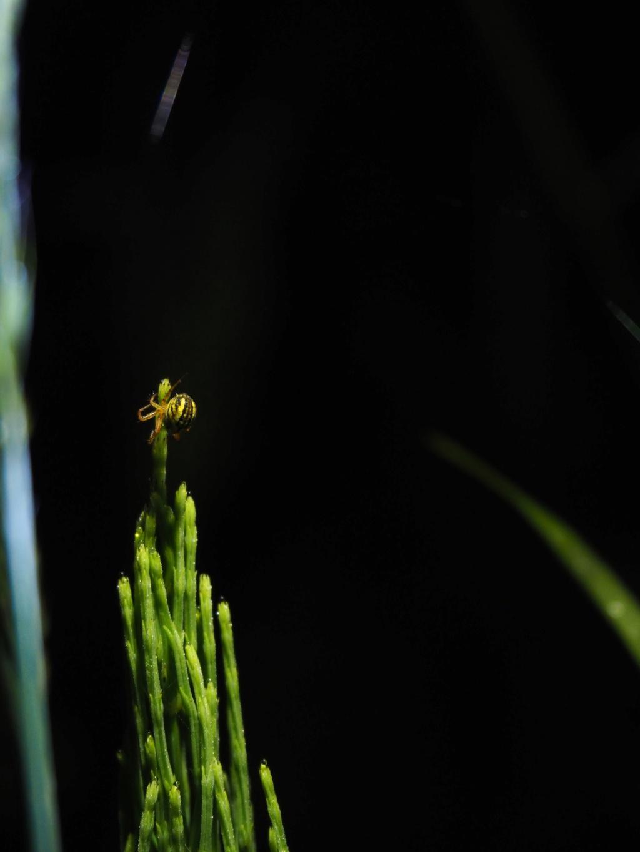 Ma passion de l'entomologie. P6090010