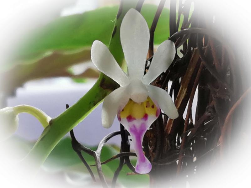 Orchideen-Neuzugang 2 - Seite 28 Psx_2049