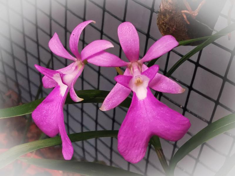 Orchideen-Neuzugang 2 - Seite 28 Psx_2051