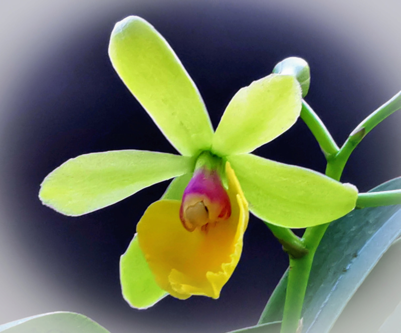 Orchideen-Neuzugang 2 - Seite 28 Psx_2052