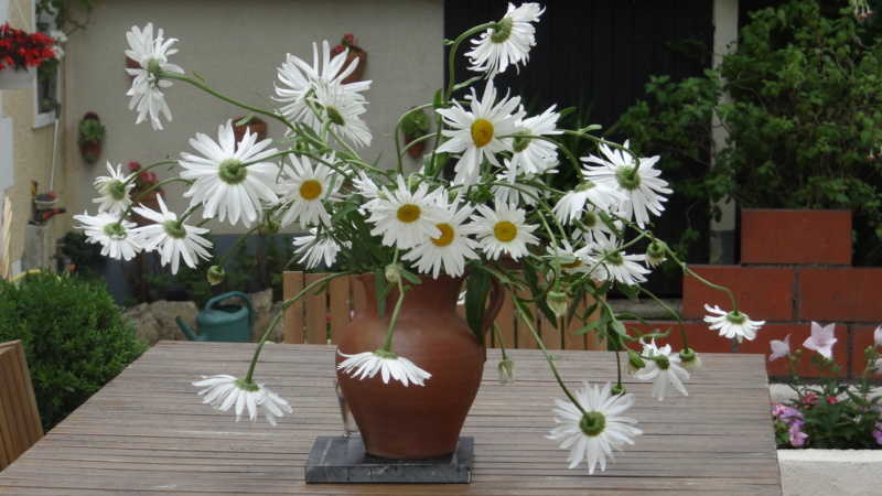 beau bouquet - Page 8 Dsc01332
