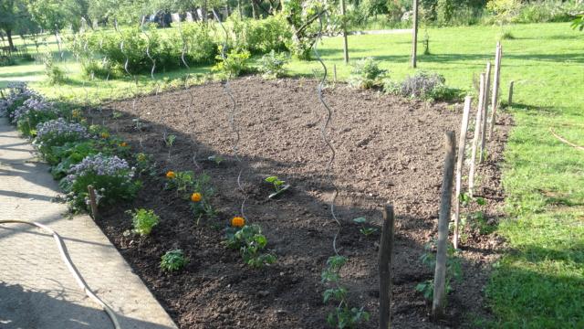 quelle est la surface de votre jardin? Dsc01810