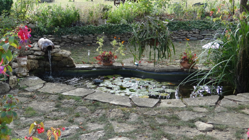 Notre petit bassin se refait une beauté Dsc02710