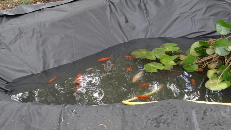 Notre petit bassin se refait une beauté Dsc02823