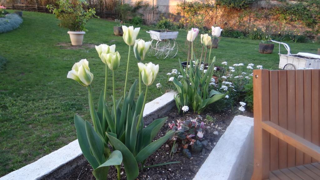 tulipes - Page 13 Dsc09017