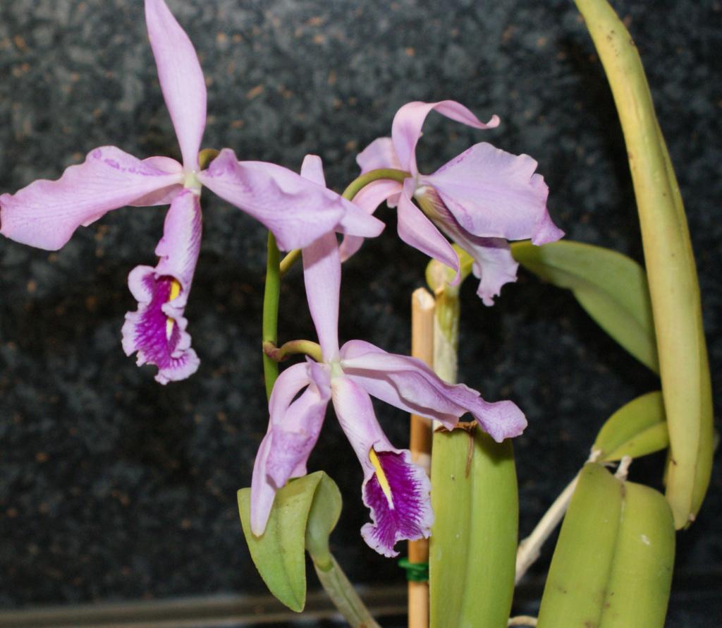 Orchideen 3 (fortlaufende Seiten 300 bis 400) - Seite 37 Catt_m10