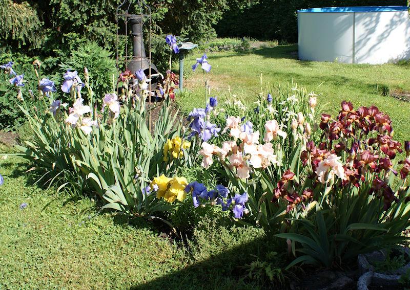 Schwertliliengewächse: Iris, Tigrida, Ixia, Sparaxis, Crocus, Freesia, Montbretie u.v.m. - Seite 27 Iris110