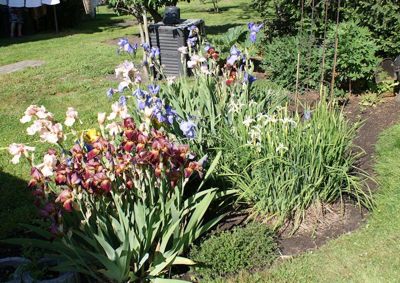 Schwertliliengewächse: Iris, Tigrida, Ixia, Sparaxis, Crocus, Freesia, Montbretie u.v.m. - Seite 27 Iris210