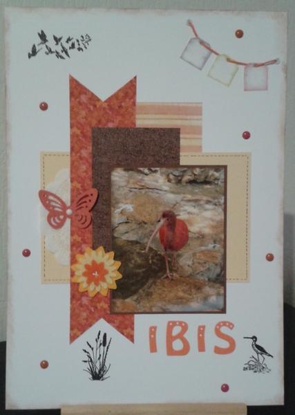 Combo 09.18 Ibis10