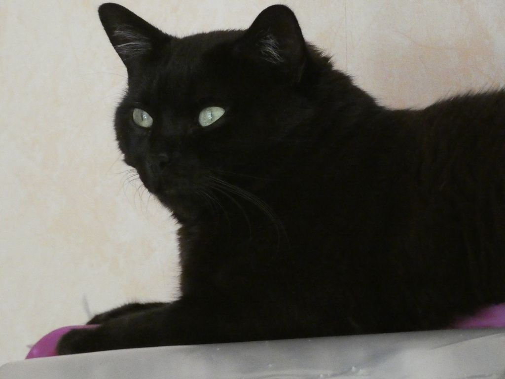 Lutzi, mâle type européen noir estimé né 01/03/2015 - Page 16 P1000016