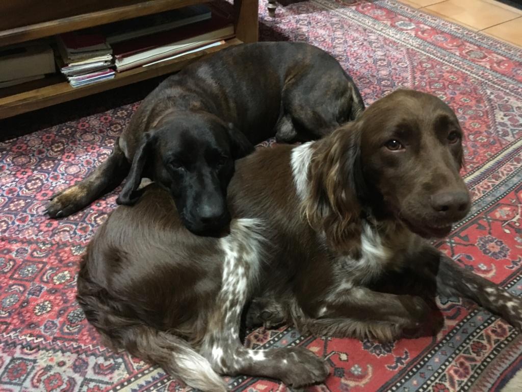 Deux chiens de recherche, un tandem ? Img_0310