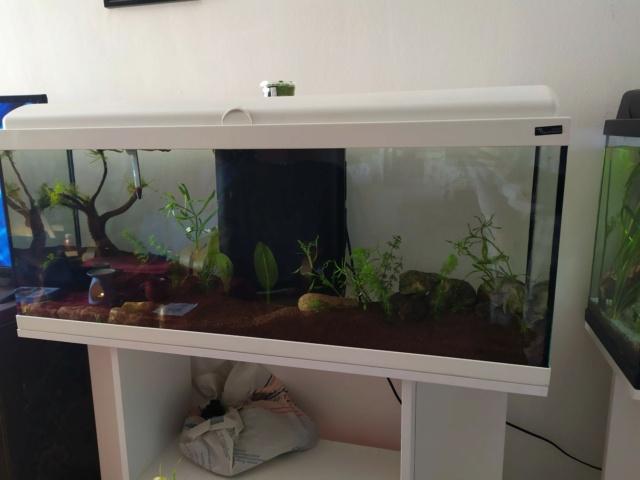 Quel système d'éclairage aquarium aquatlantis Img_2014