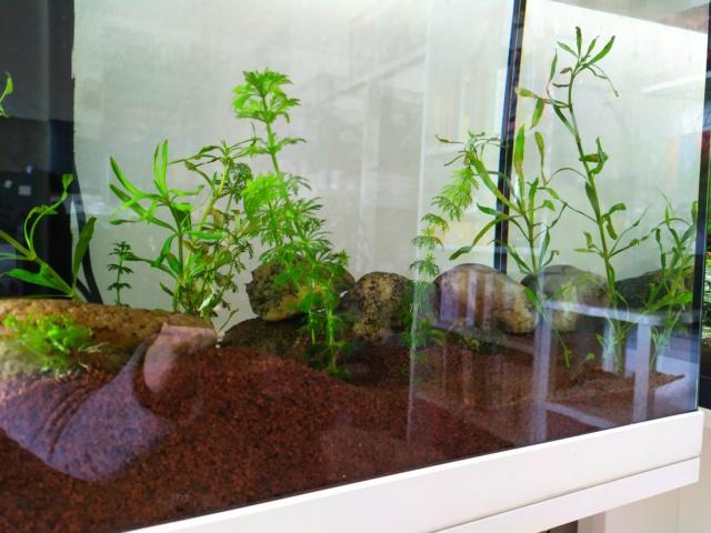 Quel système d'éclairage aquarium aquatlantis Img_2016