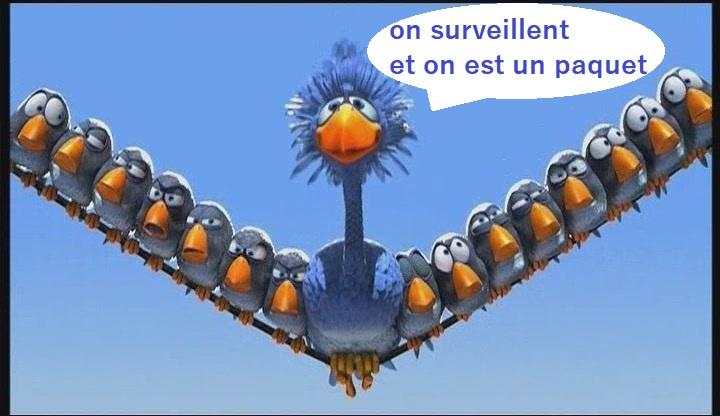 Les Charentais - Page 2 R5012510
