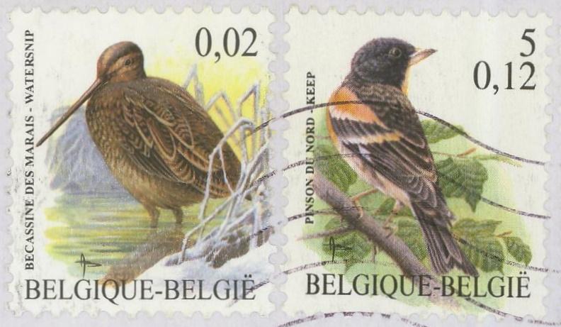 Belgien : Vogel vom BUZIN 10_80011