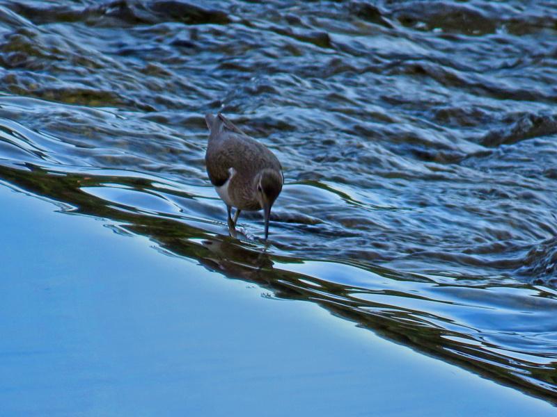 Fórum Aves - Birdwatching em Portugal - Portal Mazari10