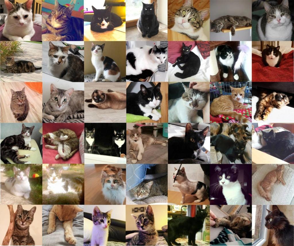 ADOPTER un chat chez les Petits Korrigans 49400810