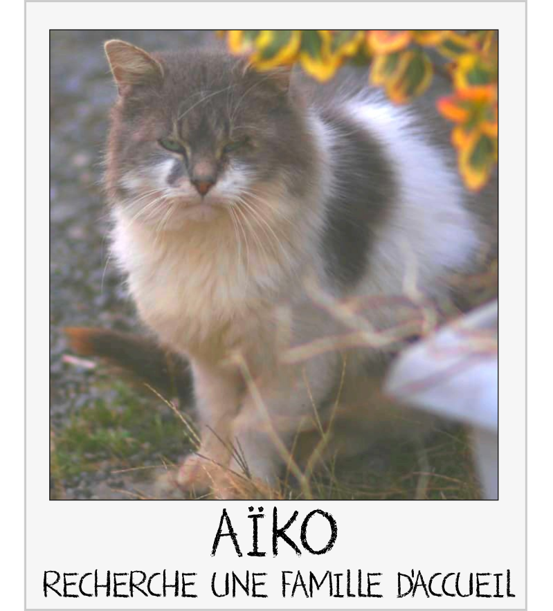 MAISON DE LA VIEILLE DAME Aiko_c10